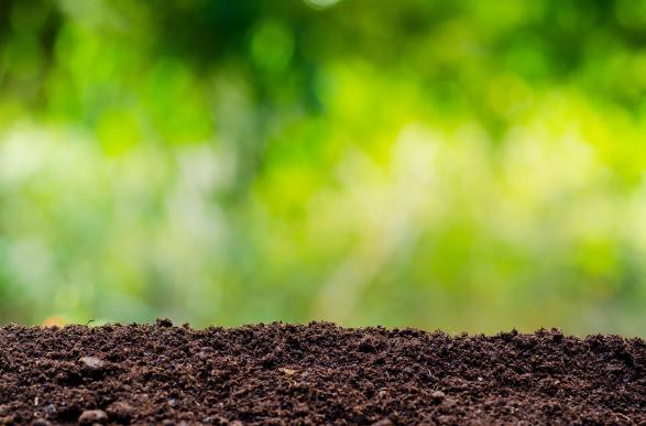 Compost, Topsoil & Bark