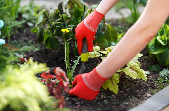 Pest Control & Weed Killer
