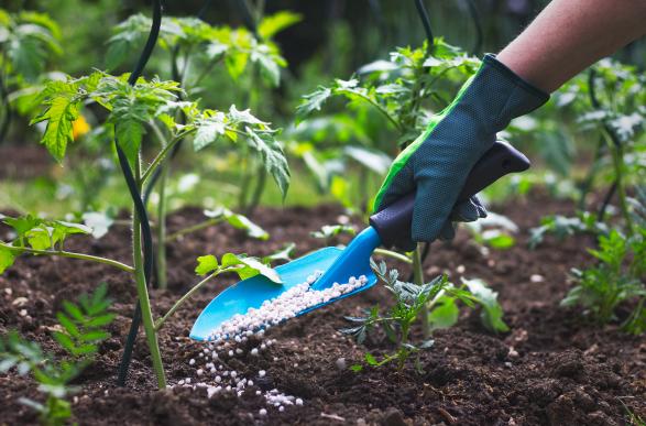 Plant Food & Fertilisers